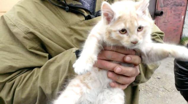 kitten found 5