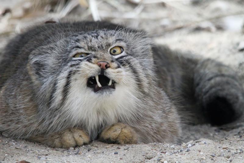 uncommon cats