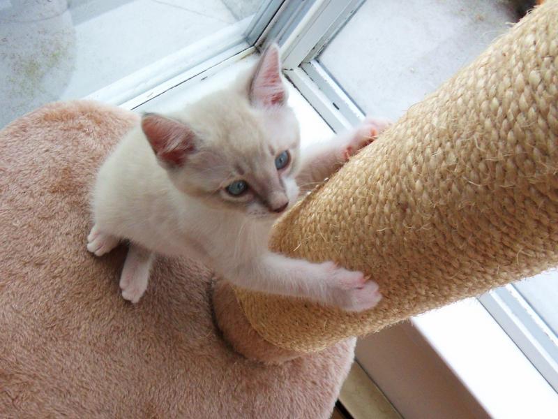 Cat Still Scratching Human