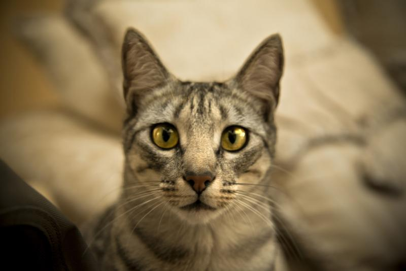 cats behaviour 4