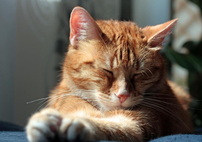cats behaviour 9
