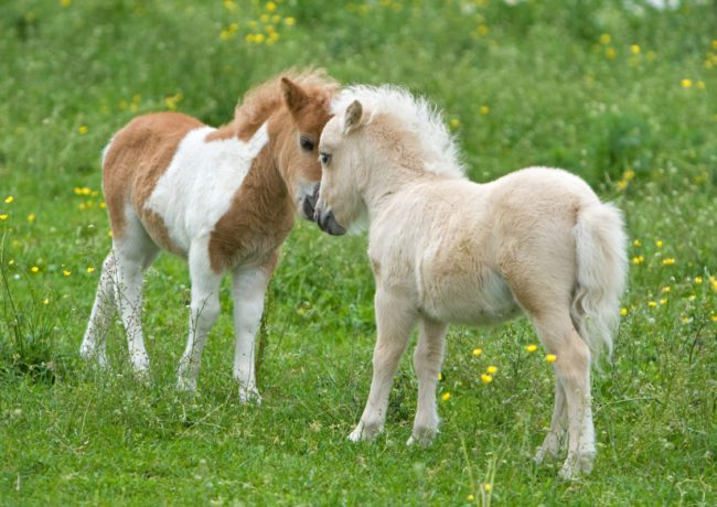 horse breeds 4