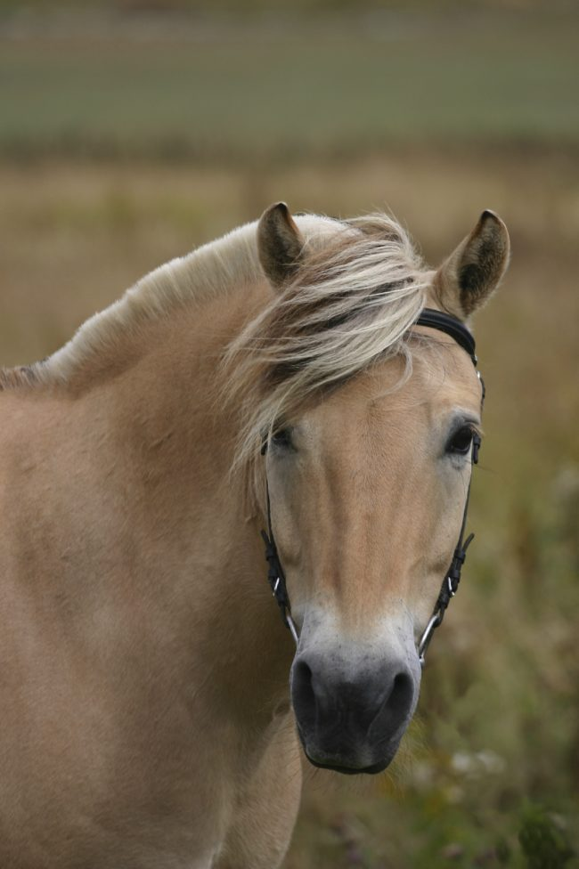 13 Horse Breeds That Look Too Beautiful To Be True But