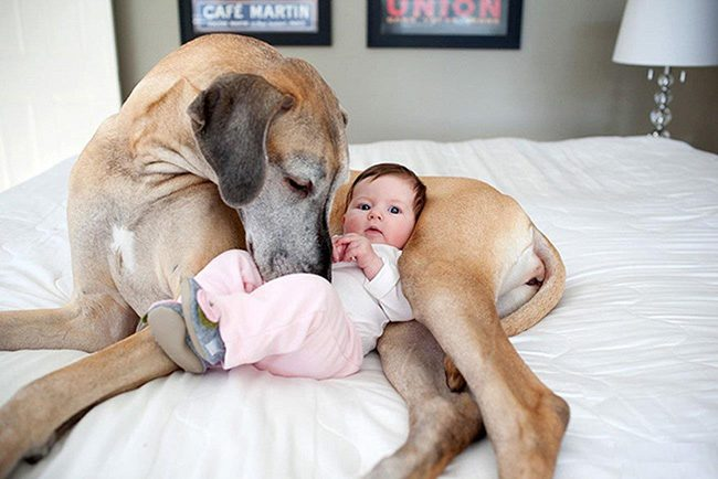 kids and dogs relationship