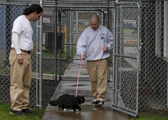 inmates with cats