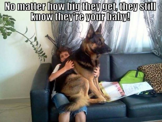 moments dog owners can relate