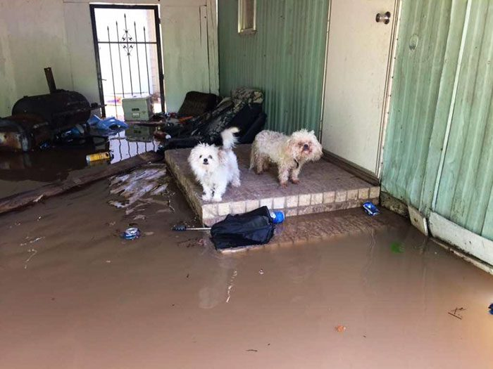 saved dogs after flood 1