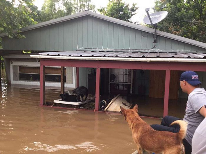 saved dogs after flood 10