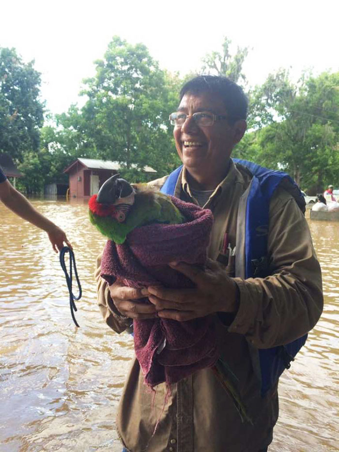 saved dogs after flood 11