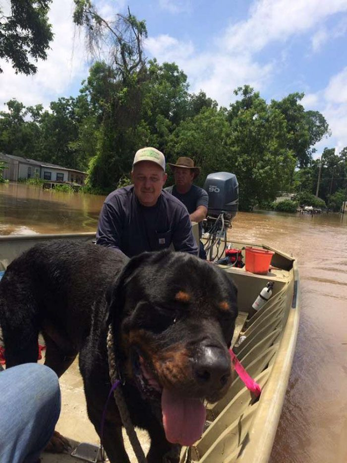 saved dogs after flood 13