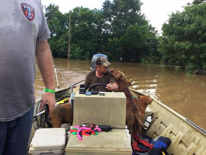 saved dogs after flood 3