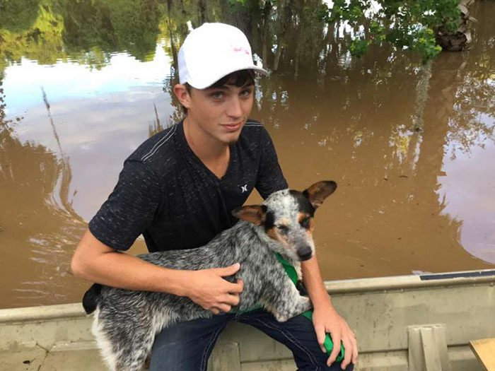 saved dogs after flood 4