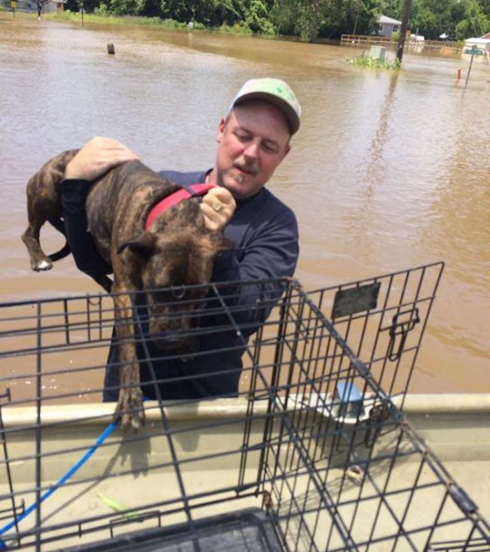 saved dogs after flood 6