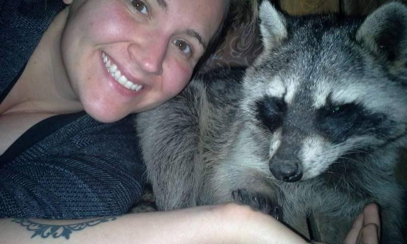 saved injured raccoon 14