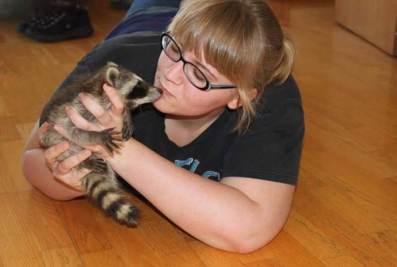 saved injured raccoon 3