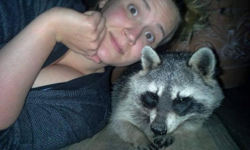 saved injured raccoon 4