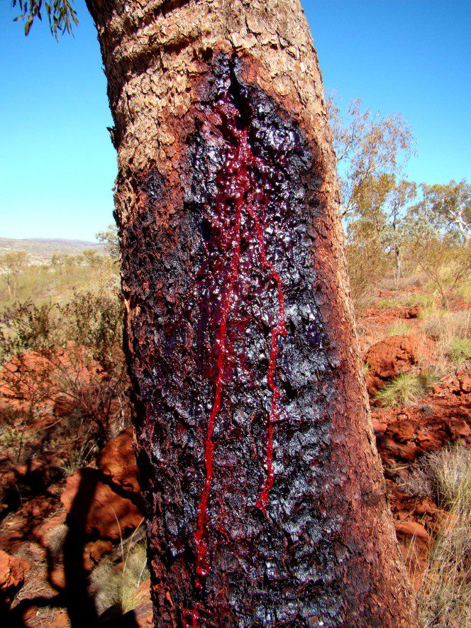blood wood tree 8