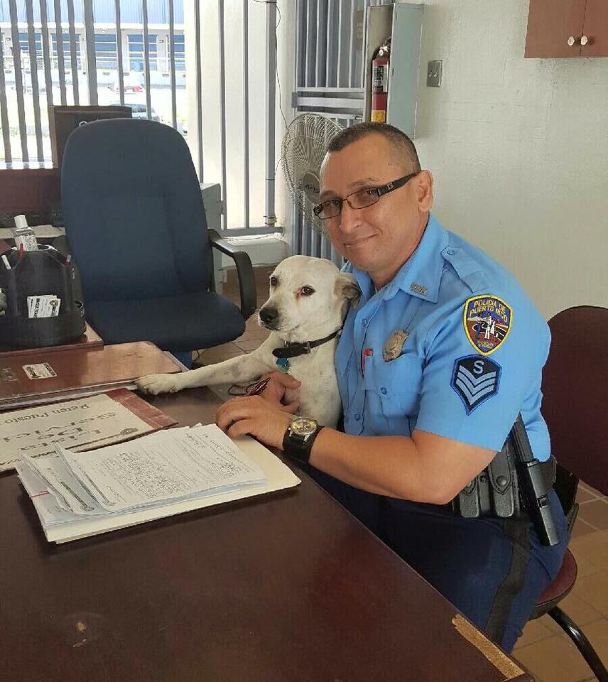 dog police job