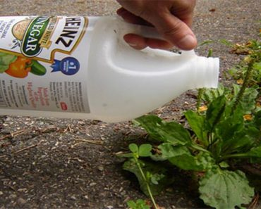 vinegar on weeds
