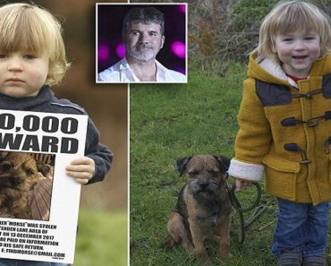 toddler reunited with dog