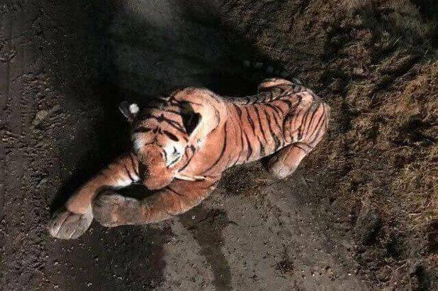 cops toy tiger standoff