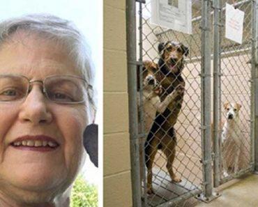 adopting old dogs
