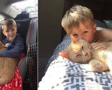 young boy adopts a ginger cat